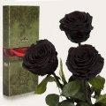 Три долгосвежие розы Florich в подарочной упаковке. Черный Бриллиант 5 карат, короткий стебель