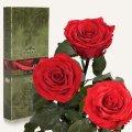 Три долгосвежие розы Florich в подарочной упаковке. Красный Рубин 5 карат, средний стебель