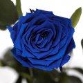 Долгосвежая роза Florich синий сапфир 7 карат, короткий стебель