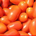 Σπόροι ντοματών