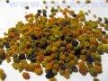 Пыльца цветочная ( пчелиная обножка )
