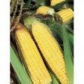 Димакс F1 семена кукурузы сладкой May Seeds 100 г
