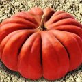 Семена тыквы Мускат де Прованс Euroseed 100г