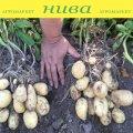 Семенной картофель Озирис овальный ранний 2 репродукция IPM Potato Group 20кг