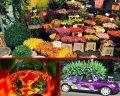 Комнатные и Уличные растения