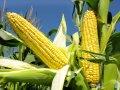 Евралис кукуруза Прайс на 2016-17 г