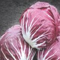Семена цикория салатного Индиго Indigo Bejo 25семян