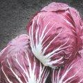 Семена цикория салатного Indigo Bejo 25семян
