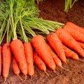 Семена моркови Купар F1 Cupar F1 2,2-2,4мм Bejo 1000000семян