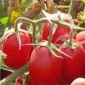 Семена томата Калиендо F1 дет. Esasem 25000семян