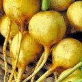 Семена редиса Злата желтого Moravoseed 25г