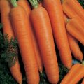 Семена моркови Наполи F1 Napoli F1 Bejo 1.6 - 1.8 25000семян
