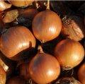 Семена лука Дормо F1 репчатого Hazera 250000семян