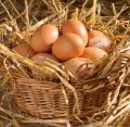 Brown fresh eggs c2