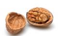 Скорлупа грецкого ореха (shell walnut)