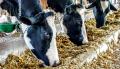 Универсальный фермерский премикс для крупного и мелкого рогатого скота 3,5- 2,5%