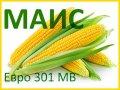 Семена кукурузы Евро 301 МВ (ФАО 300) - МАИС