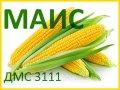 Семена кукурузы ДМС 3111 (МАИС)