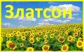 Семена подсолнечника Златсон - Авалон