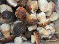 Замороженные белые грибы (целые)