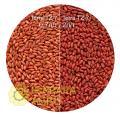 Фарба для насіння пшениці TERRA TZ-7