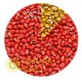 Фарба для насіння кукурудзи VITA R-5