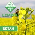 Семена озимого рапса Вотан Лембке (Вотан Lembke)