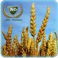 Пшеница озимая Эстивус
