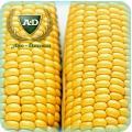 Семена кукурузы Бресси КС