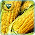 Семена кукурузы Эден Стар