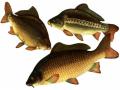 Премикс ШенМикс Фиш 2% промысловая рыба, артикул Р37