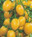Семена томата Cytrynek Groniasty (Польша)