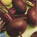 Семена Свеклы столовая Египетская плоская