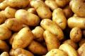 Картофель Сорт Гранада