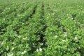 Гербициды,фунгициды,инсектициды,протравители,десиканты,инокулянты,регуляторы роста растений