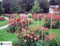 Опоры и колышки для цветов и растений Polyarm