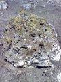 Камень дырчатый Айпетри бело-серый