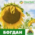Семена подсолнечника Богдан под евролайтинг