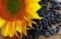Насіння соняшника, гібрид ЛГ 5452ХО КЛ*