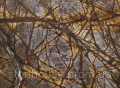 Мрамор Bidasar Brown Коричневый с темно-коричневыми прожилками