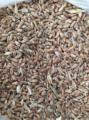 Зерноотходы пшеницы, применяемые в животноводстве, птицеводстве