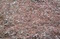 Зерноотходы пшеницы, применяемые в животноводстве