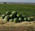 Water-melons, in Ukraine, the price, a ph