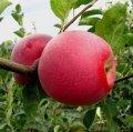 Appletree anahtarları