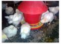Кормушки бункерного типа, купить, Кривой Рог для цыплят