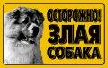 """Наклейка """"Осторожно ,злая собака"""" кавказ.овчарка, полноцвет 3719"""