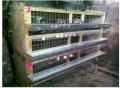 Клетки для перепелов-несушек, Кривой Рог, Украина, Клетка на 90 голов несушек