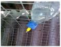 Ніпельна автопоїлка для кролів з нержавіючим або пластиковим ніпелем