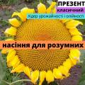 Соняшник гібрид Презент