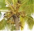 Пальмовое масло RPO, пищевое